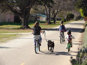 Hillsborough-St-Bike-Lanes-Dogs